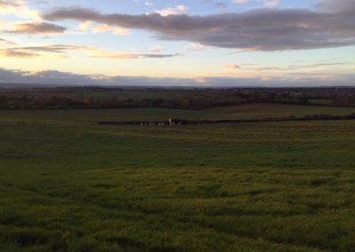 alpacas-yorkshire (1)