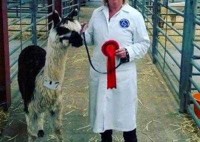 clifton-alpacas-yorkshire (1)